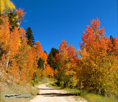 Fall colors starting be in pagosa country soon pagosa springs fall colors starting be in pagosa country soon sciox Choice Image