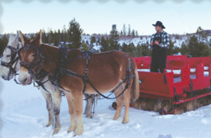 Cool Rides Of Colorado Springs >> There is plenty of snow for sleigh rides! - Pagosa Springs Colorado