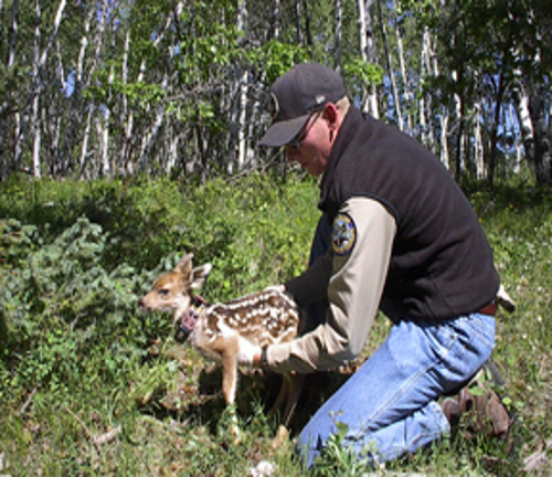 Colorado Parks & Wildlife Caring For Mammals